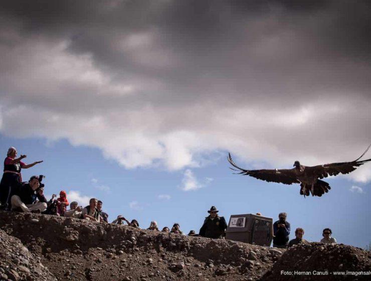 liberacion condor andino