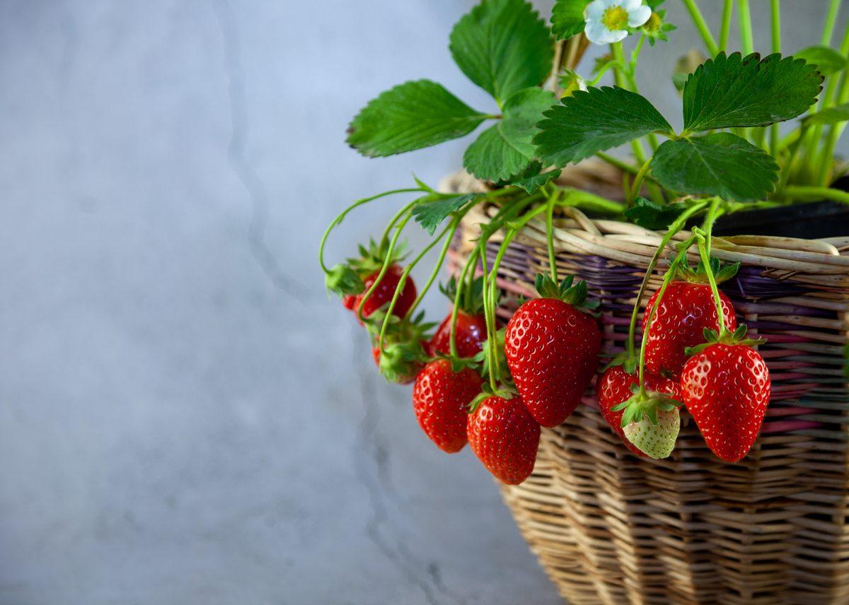 propiedades de las frutillas