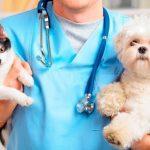 rabia perros y gatos