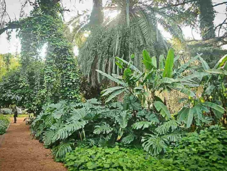 reabren jardin botanico