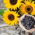 propiedades de la semilla de girasol
