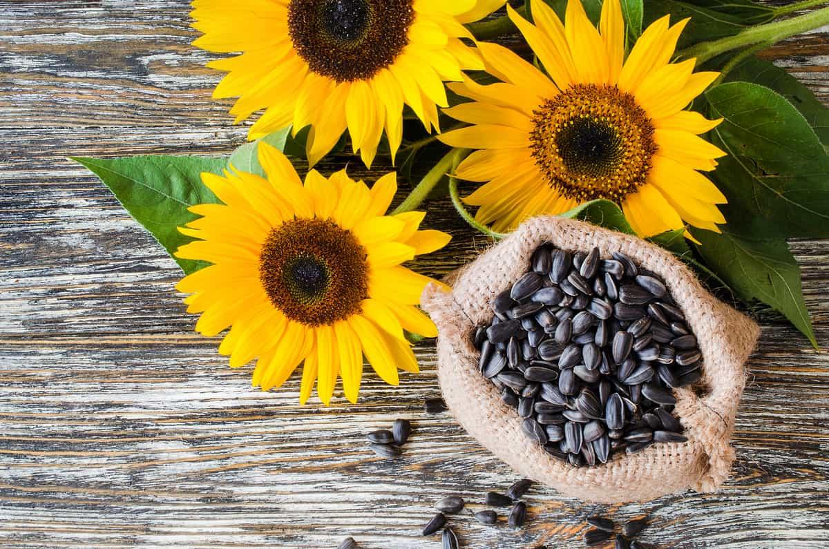 semillas de girasol cómo consumirlas