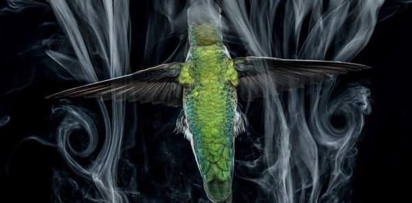 fotos donadas vida silvestre medio ambiente