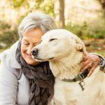 perros y humanos envejecen