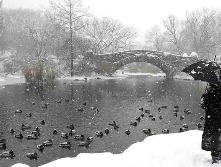 Nueva York nevada