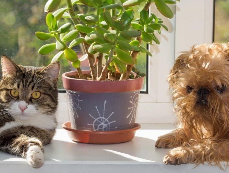 5 plantas buenas para mascotas