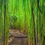 fabula del helecho y el bambu