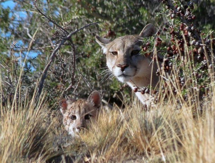 caza animales vida silvestre