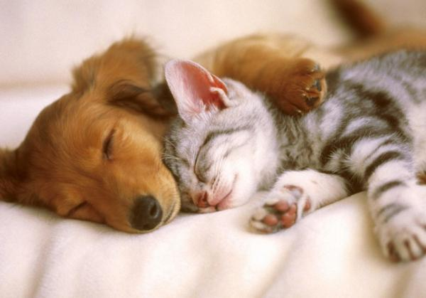 Síntomas de coronavirus en perros y gatos
