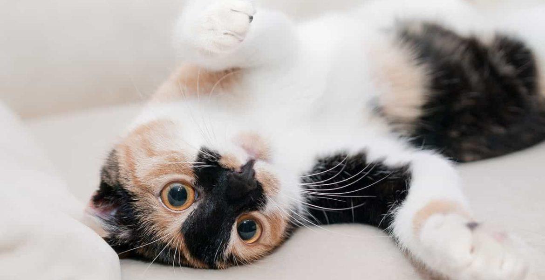 Por que los gatos actuan raro, segun la ciencia